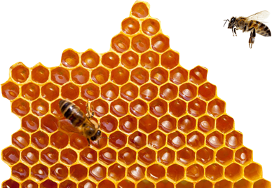 Nous aimons les abeilles !